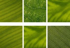 Proposal Leaf Triptych Photographs