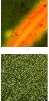 Chosen Single Leaf Photographs for foyer and corridor